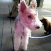 050329_dog2