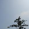 050827_hayama5