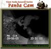 050907_panda3