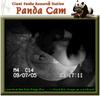 050907_panda4