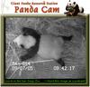 050907_panda5a