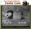 050907_panda5b
