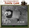 050907_panda5c