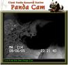 050907_panda