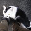 060519_cat