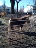 Pony100116