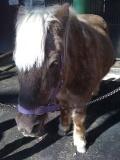 Pony100116b