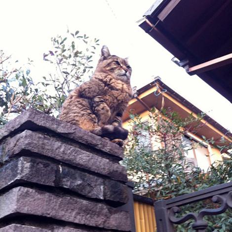 201202_okimononeko